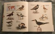 Visual Dictionary of Animals (77)