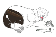 1581107069.bearhybrid sushigbbwm copy 2