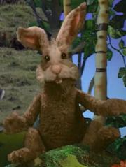 Sean the Rabbit