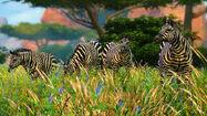 Zebras in Cabela's African Adventures