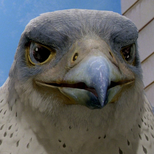 Falcon (Stuart Little 2)