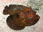 Stone Fish at AQWA SMC2006