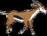 Timmy the Thomson's Gazelle