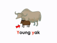 Young Yak