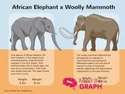 Elephants and Mammoths Side By Side