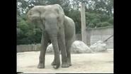 Elephants are Large Mammals