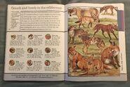 Fantastic World of Animals (82)
