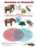 Mammoths and Mastodons Hunted by Humans