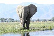 Wild-elephant-1724232 1280