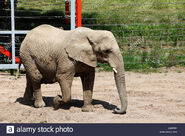 Elephant At Noah's Ark