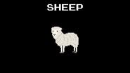 KPS Sheep