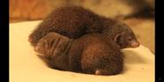 Milwaukee County Zoo Mongooses