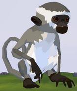 Vervet Monkey WOZ