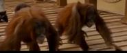 Evan Almighty Orangutans