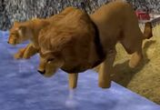 Lion-wildlife-park-2