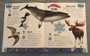 Polar Animals Dictionary (15)
