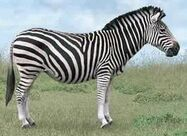 Zebra switch zoo