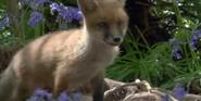 Earth 2009 Fox