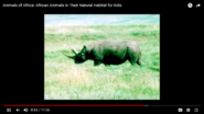 The Black Rhino Is Bad Tempered and Africa Has the Largest Land Animal In the World The African Elephant