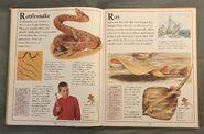 The Kingfisher First Animal Encyclopedia (57)