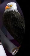 Madagascar 3 Eagle