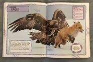 Nature's Deadliest Creatures (67)