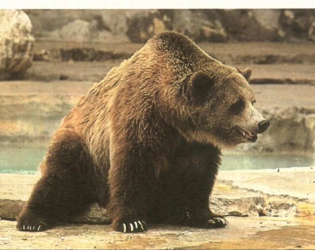многим вымершие медведи фото как-то неудобно