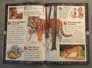 Wild Cats and Other Dangerous Predators (5)