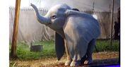 2019 Dumbo