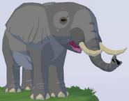 African Bush Elephant WOZ