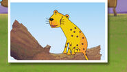 Bo the Cheetah