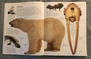 DK Encyclopedia Of Animals (19)