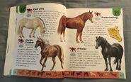 Horse Dictionary (8)