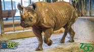 Milwaukee County Zoo Rhino