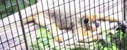 Monkey in miami zoo