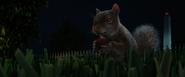 NatM Squirrel