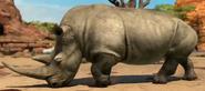Northern-white-rhinoceros-zootycoon3