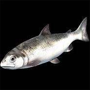 AoE2 DE salmon icon
