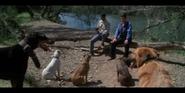 Crocodile Hunter Dogs