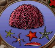 Echinoderms in hugo lek och lar 7 hugo och djuren i havet