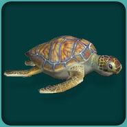 Green Sea Turtle (Blue Fang)