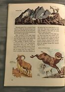 A Golden Exploring Earth Book of Animals (23)