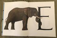 Animal Alphabet (Bert Kitchen) (3)