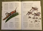 Creepy Crawlies (Over 100 Questions and Answers to Things You Want to Know) (8)