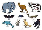 Elephant Mandrill Baboon Springhare Rabbit Dolphin Mongoose Meerkat Rat Bat Cow Kangaroo Hyrax Cheetah Giraffe and Okapi