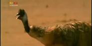 MMHM Emu