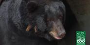 Naples Zoo Bear