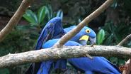 Nashville Zoo Macaw