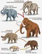 Tale Of Elephants, Woolly Mammoths,Mastodons, Hippos, Rhinos, Whales, Manatees, and Hyraxes