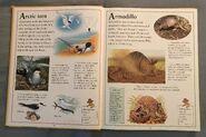The Kingfisher First Animal Encyclopedia (5)